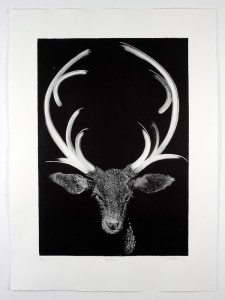 Blitzen-Monotype-image size-58x40cms-paper size-76x56cms-black-white-contemporary-animal-Deborah-Treliving- contemporary-British-artist