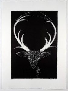Dasher-Monotype-image size-58x40cms-paper size-76x56cms-black-white-contemporary-animal-Deborah-Treliving-contemporary-British-artist