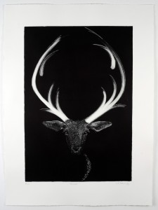 Prancer-Monotype-image size-58x40cms-paper size-76x56cms-black-white-contemporary- animal-Deborah-Treliving-contemporary-British-artist