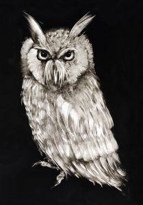 Archimedes-A6-notelet-card-black-white-wise-owl-Deborah-Treliving-contemporary-British-artist